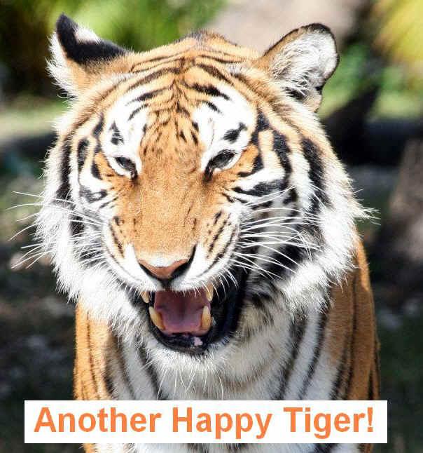 Go Back > Gallery For > Smiling Tiger